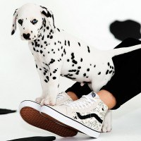 collection-vans-dalmatiens